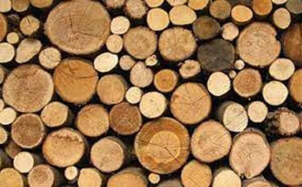 Phân biệt các gỗ tần bì và gỗ sồi