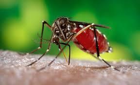 mơ thấy muỗi